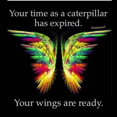 your time as a caterpillar is over
